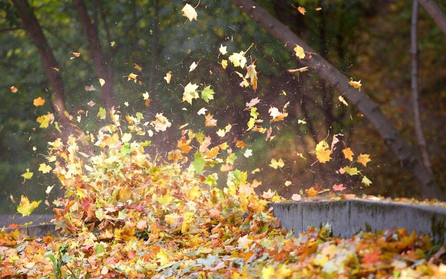 Vertingo komposto iš nukritusių lapų paslaptis – kokie privalumai ir trūkumai