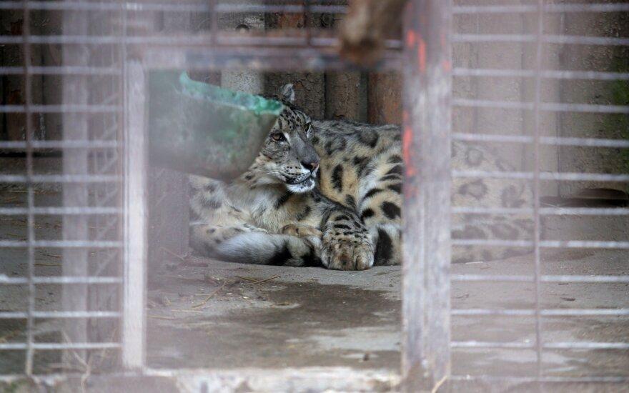 Skųs teismo sprendimą dėl Zoologijos sodo rekonstrukcijos pirkimo