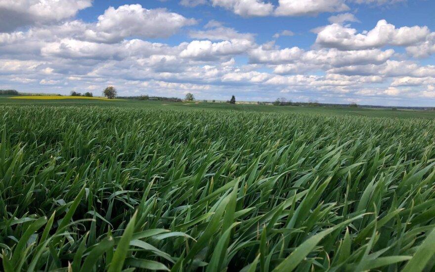 """Lemtingas grūdų derliui purškimas fungicidu: kodėl verta rinktis """"Revytrex®"""""""