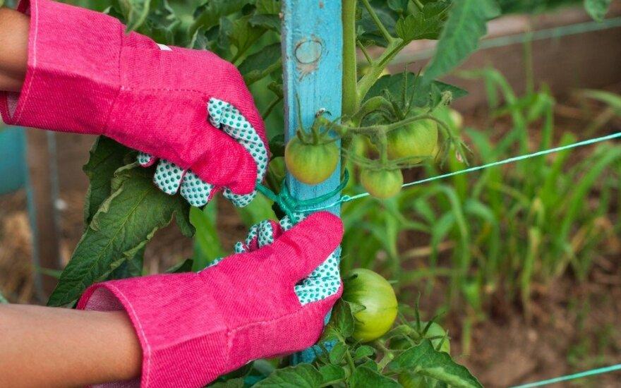 Prasidėjo sodo darbai: kodėl tai naudinga sveikatai?