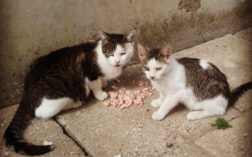 Nelaimingas katinas Šilutėje prašo pagalbos!
