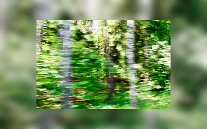 Buvę Lietuvos miškų ūkio vadovai priekaištauja valdžiai dėl nenoro pertvarkyti Generalinę miškų urėdiją