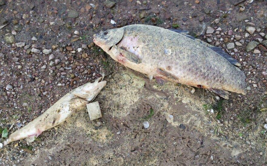 Ngaišusios žuvys