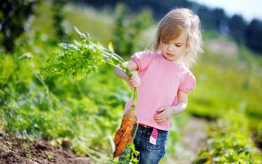 Visos mamos norėtų, kad jų vaikai valgytų daugiau daržovių