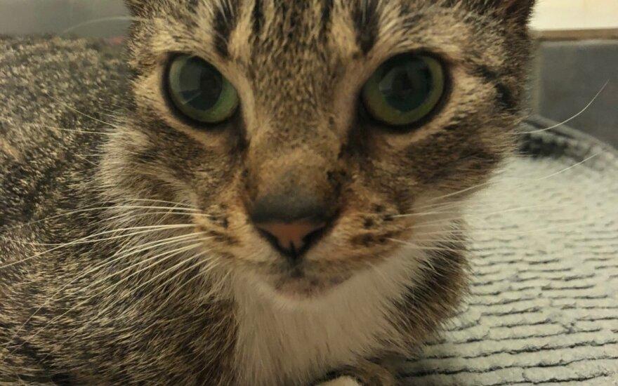Ryškiai žalių akių rami katytė ieško naujų namų