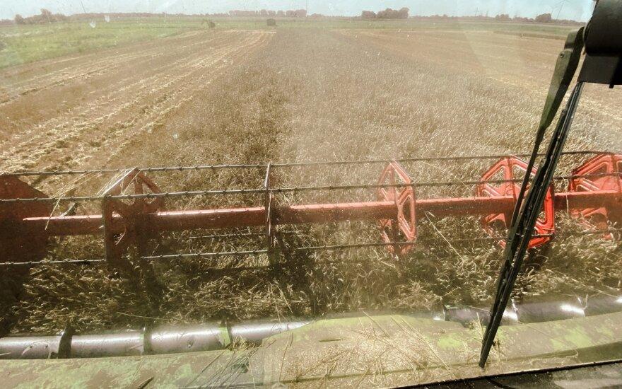 Rugpjūtį 36,7 proc. padidėjo ekologiškų grūdų supirkimas iš Lietuvos augintojų