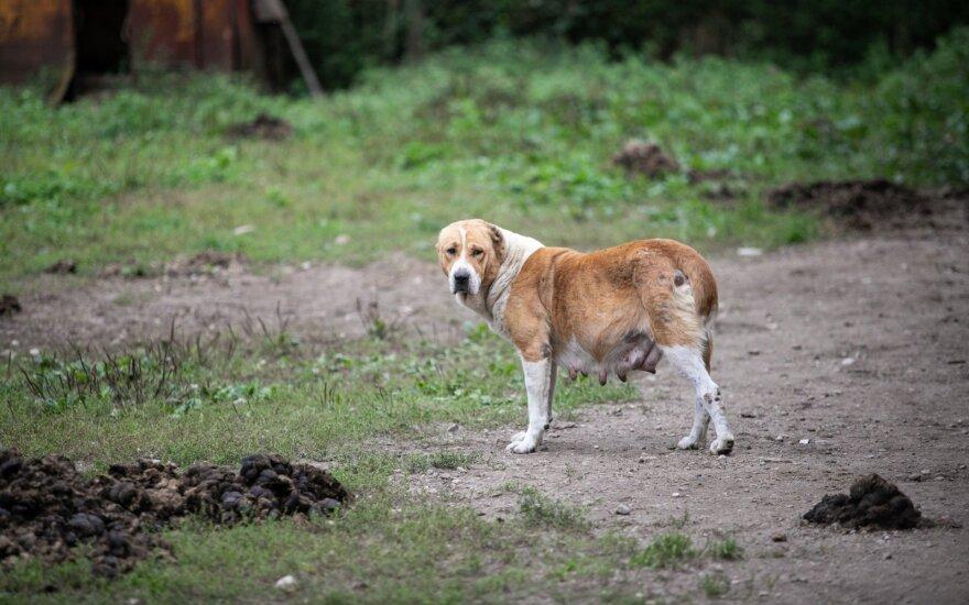 Gyvūnų daugykla, asociatyvi nuotr.