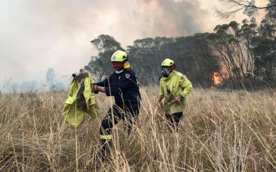 Australijoje stiprėjant kaitrai baiminamasi naujos gaisrų bangos