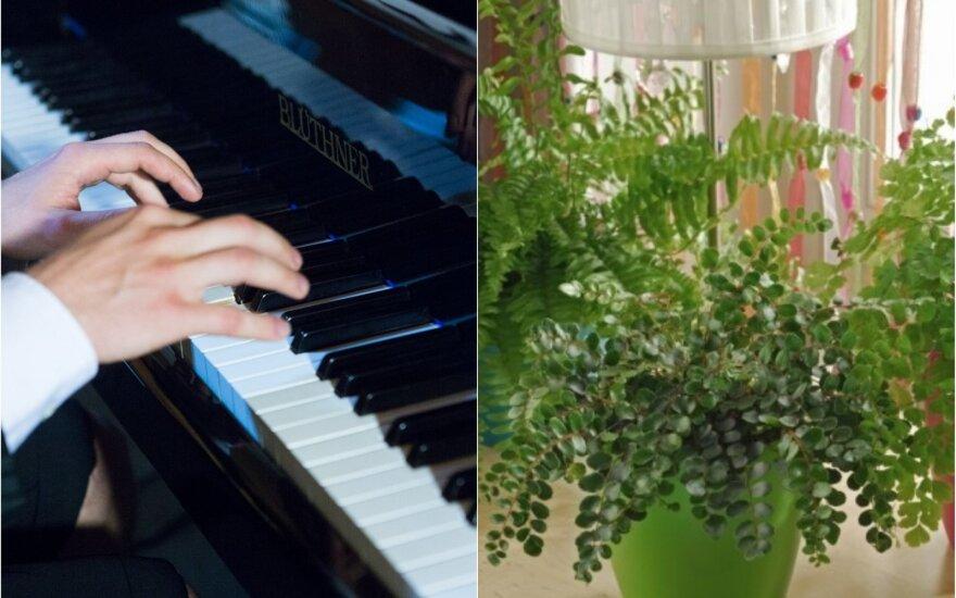 Muzikos įtaka augalams