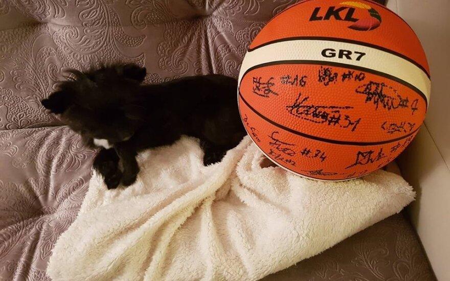 """BC """"Šiaulių"""" krepšininkai įteikė dovanų beglobiams gyvūnams"""
