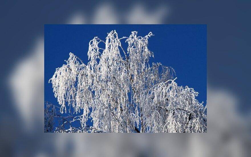 Žiema savaitgalį taps truputį švelnesnė
