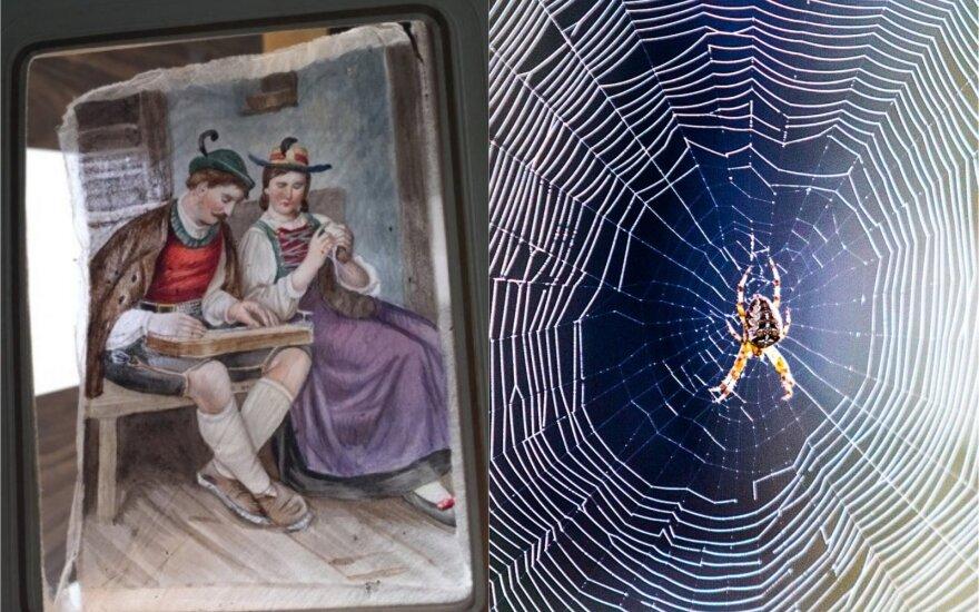 Paveikslai ant voratinklių