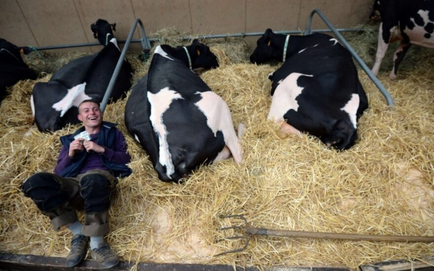 Ūkininkai: šaudyti karves ar dar palaukti?