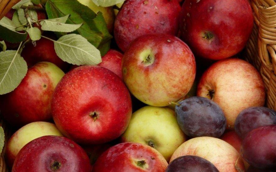Lietuviai rudeniu džiaugėsi ragaudami derlių