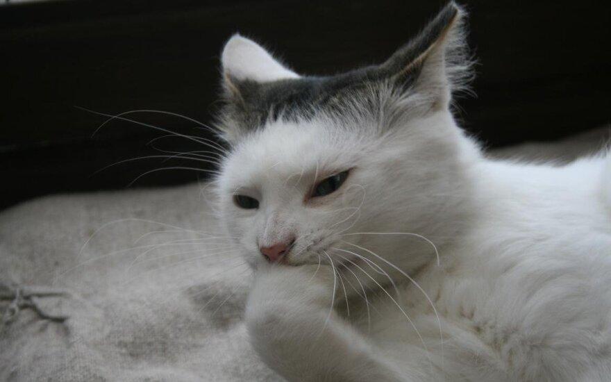 Baltutis storulis Ratulis – tiems, kuriems trūksta šilumos ir jaukumo