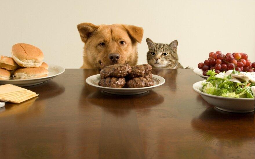 Dalinatės maistu ir bučiniais su augintiniu? Geriau to nedarykite