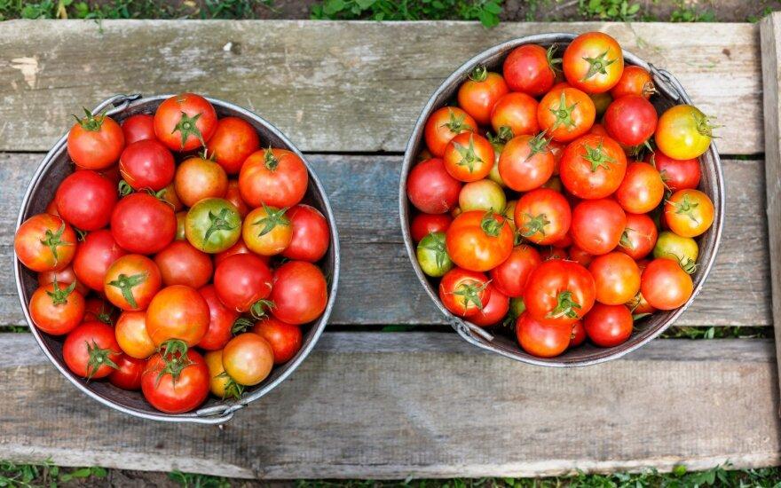 Paprastas būdas, kaip išlaikyti pomidorus šviežius iki pat Kalėdų