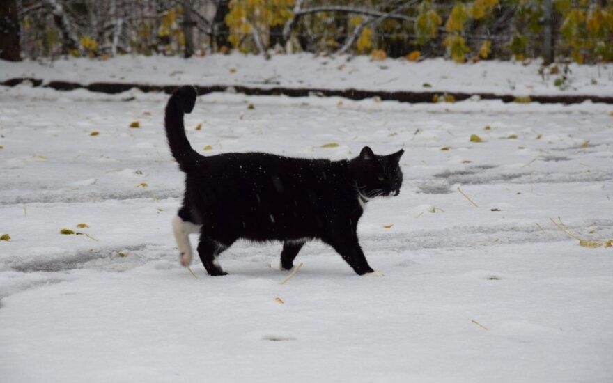 Katė žiemą