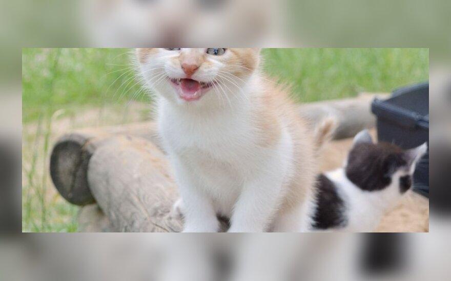 Dovanojamas kačiukų trio!