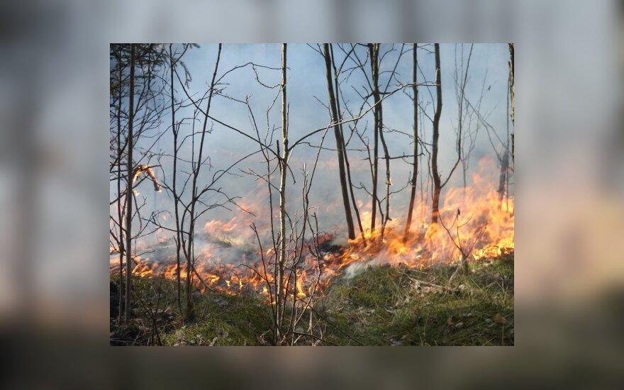 Degantys miškai jau grasina ir gyvenvietėms