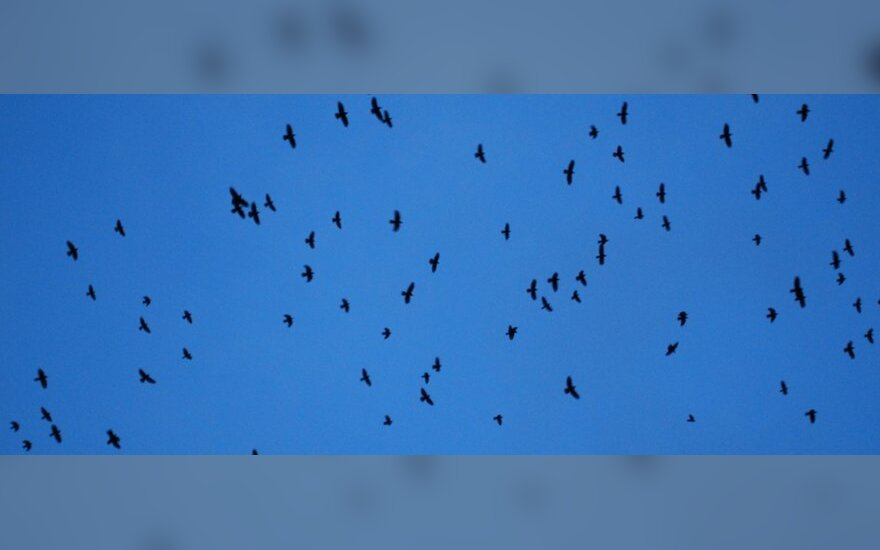 JAV išgaišo daugiau paukščių ir žuvų