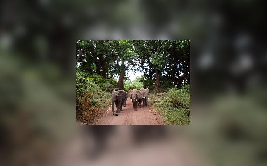 Safaris po šiaurės Tanzaniją