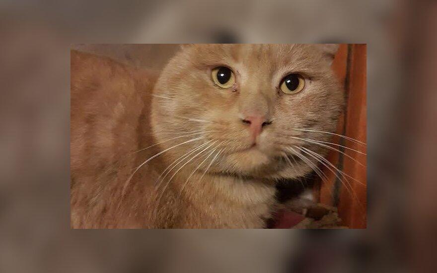 Katinas Kitas