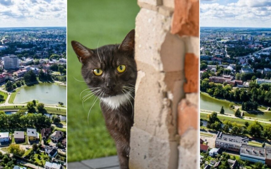Katės Panevėžyje