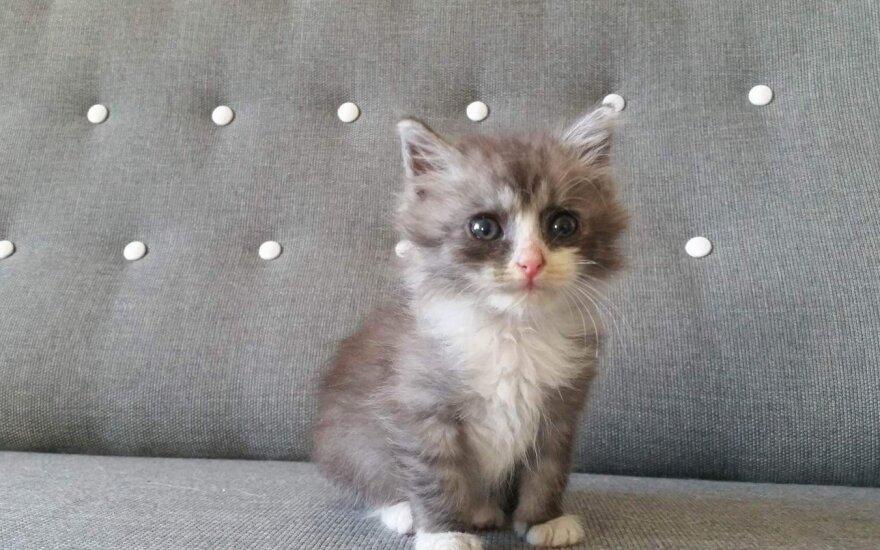 Pūkuotam kačiukui reikia namų