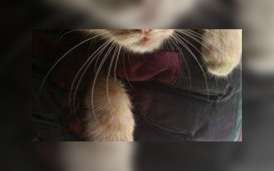Mažylio Franky sulaužyta kojytė: labai reikalinga parama operacijai
