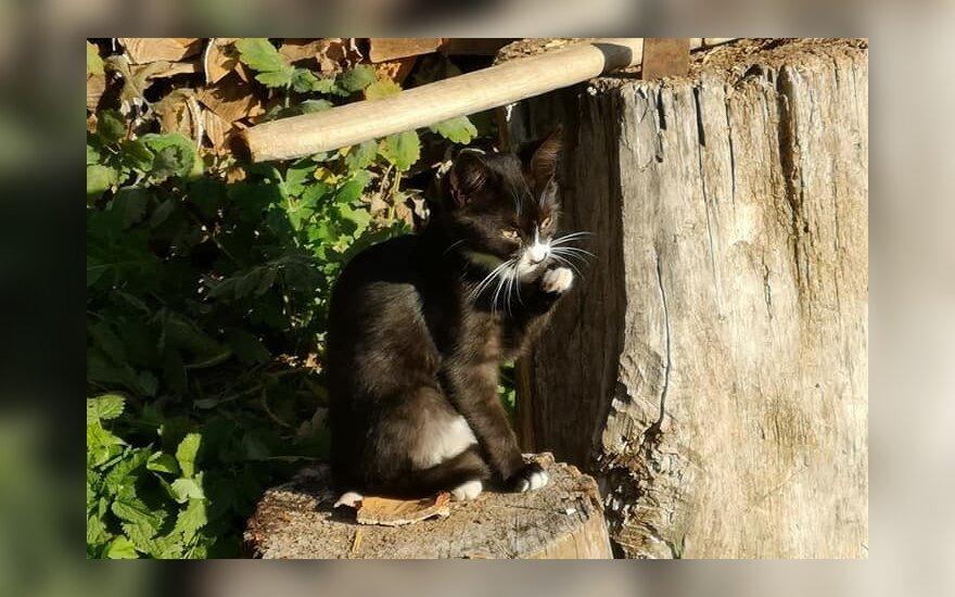Laime reikia dalintis: gražiam kačiukų pulkeliui ieškomi namai