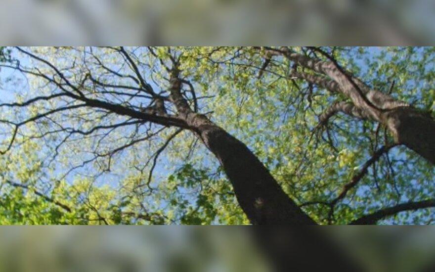 """Medis - ne tik deguonies gamykla, bet ir gausybės rūšių """"bendrabutis"""""""