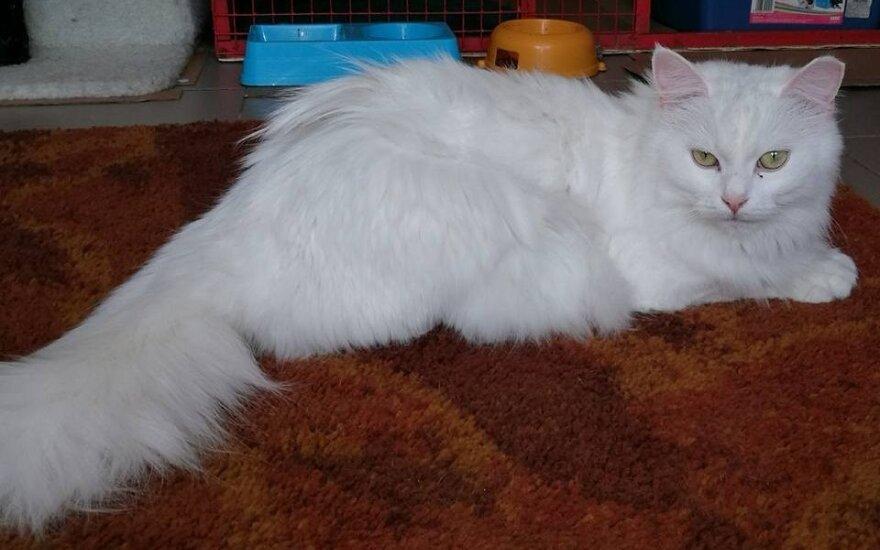 Gražuolė Pusnytė gali tapti tavo katyte