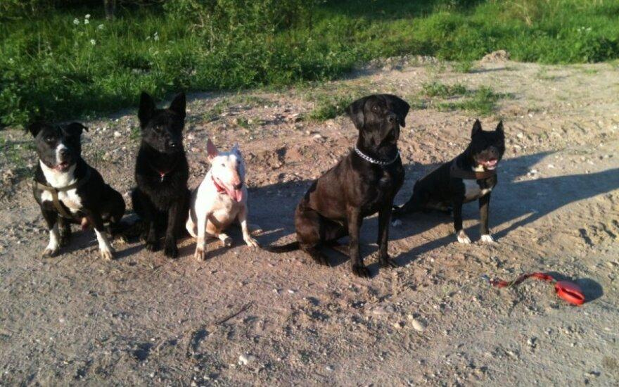 Apie šunis: bijoti reikia ne veislės, bijoti reikia žmonių ir jų blogų kėslų