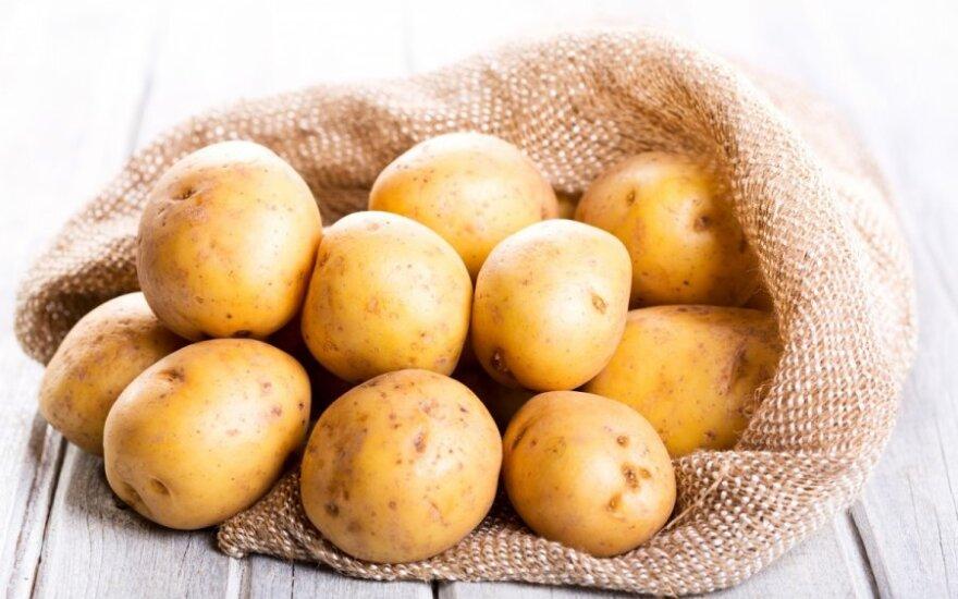 Parduotuvėse pirmos lietuviškos bulvės – kiek gali kainuoti iš jų kepti plokštainį