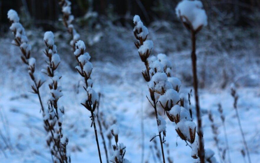 Į Lietuvą sugrįžo žiema: nuotraukų galerija