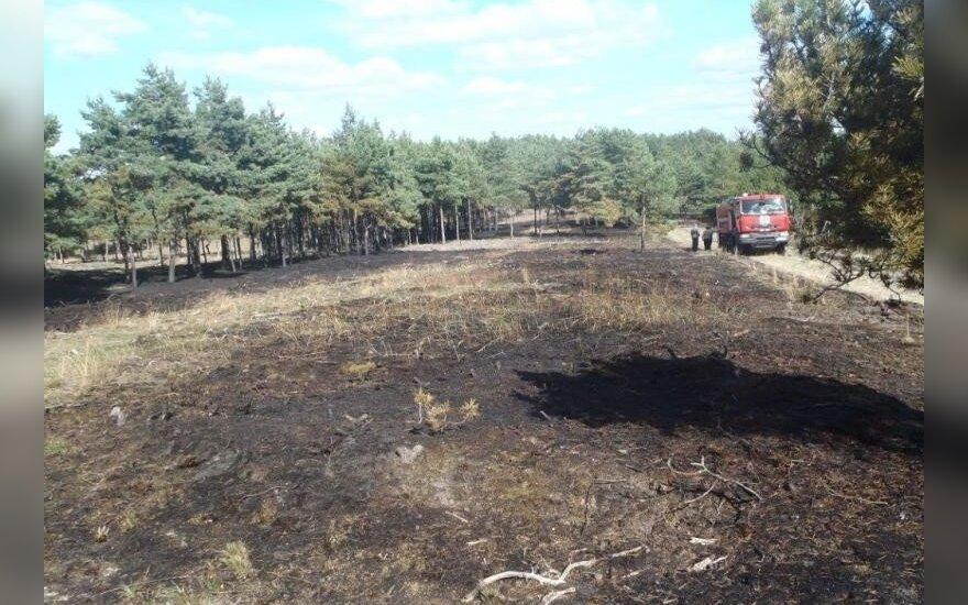 Išdegusi miško paklotė Kuršių nerijoje