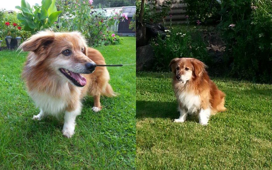 Prie Sudervės dingo šuo – prašo padėti