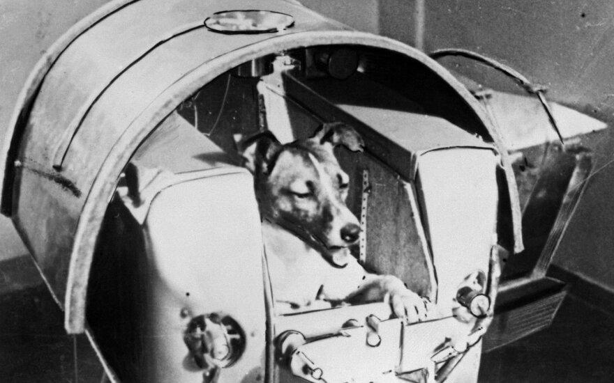1957 m. šuo Laika tapo pirmąja gyva būtybe, išsiųsta į kosmosą