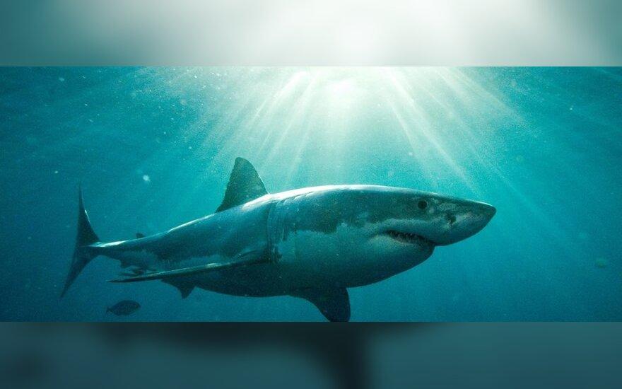 EP prašo liautis pjaustyti rykliams pelekus