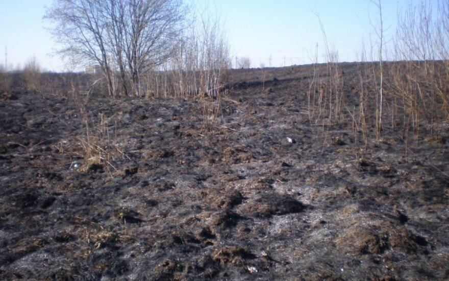 Gaisrų gamtoje padariniai - kilometriniai degėsių plotai
