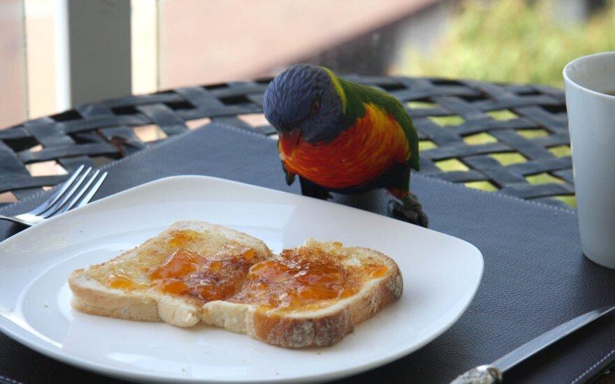 Pusryčiai taupantiems: gardūs ir greitai pagaminami