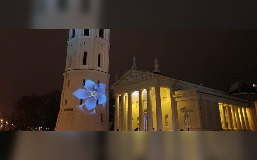 Forget-me-not on Vilnius Cathedral. Photo by Kristina Sporychina