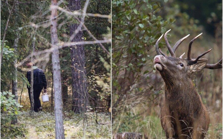 Trofėjų medžioklė
