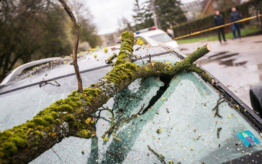 Smarkus vėjas vartė medžius: ugniagesiai jų šalinti vyko 35 kartus
