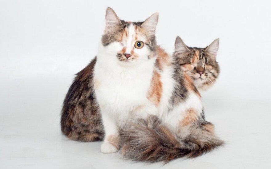 Felisė ir Matilda