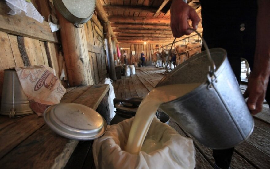What Latvian farmers should do with the spare milk?