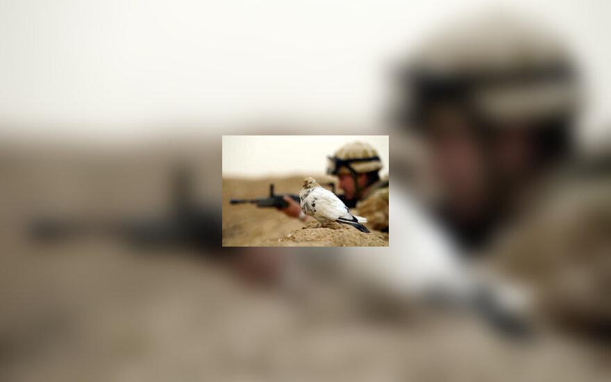 JAV karys ir balandis