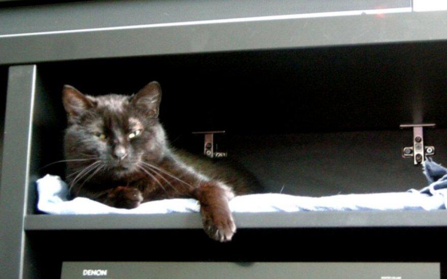Muzikalusis katinas ieško šeimininkų