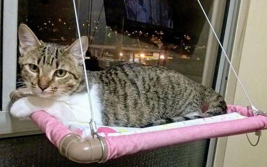 Žavingos idėjos kačių lovytėms